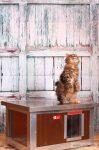 """Thermo WOODY Katzehütte """"CAT"""" mit Fenster innengrösse (LxBxH:54x38x28cm) mit INFRAHEIZUNG"""